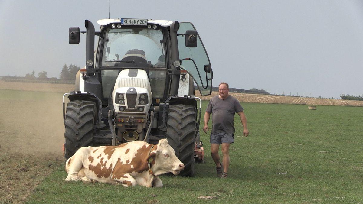Grünlandumbruch ein Problem in der Landwirtschaft