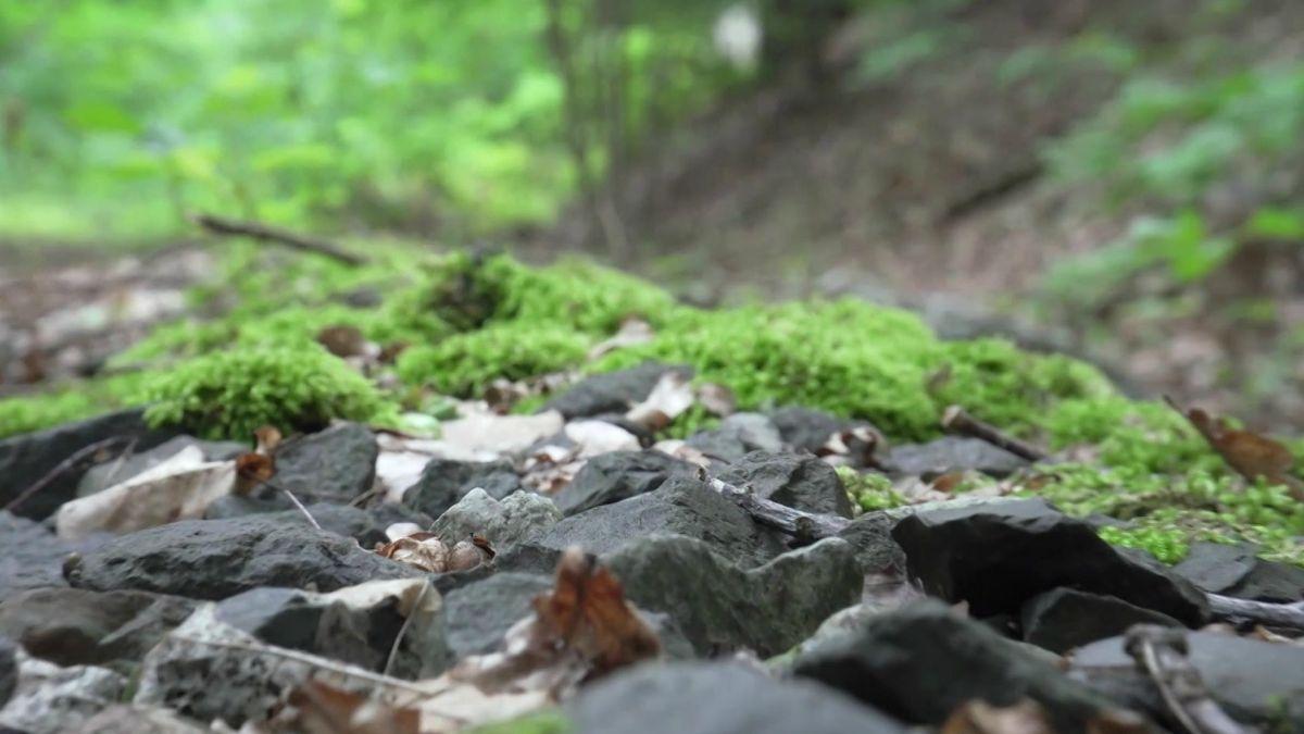 Schottersteine auf einem moosbedeckten stillgelegten Bahngleis