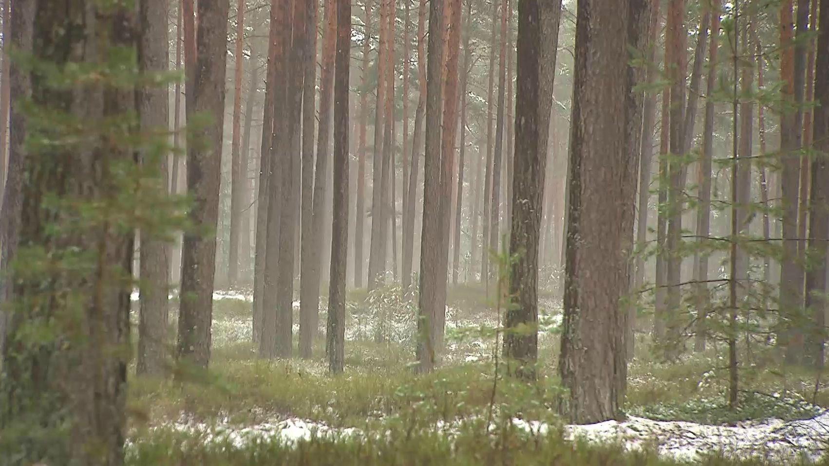 Wald der Heilig-Geist-Stiftung Nürnberg bei Schnaittach