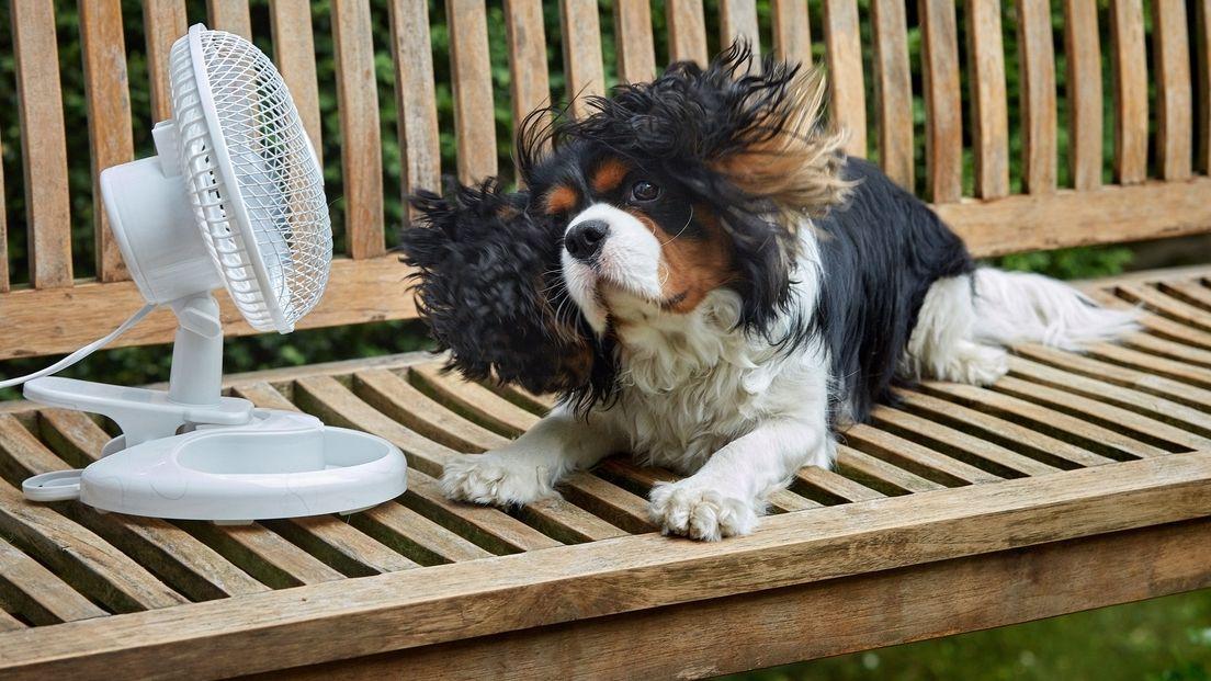 Hund vor Ventilator auf einer Bank
