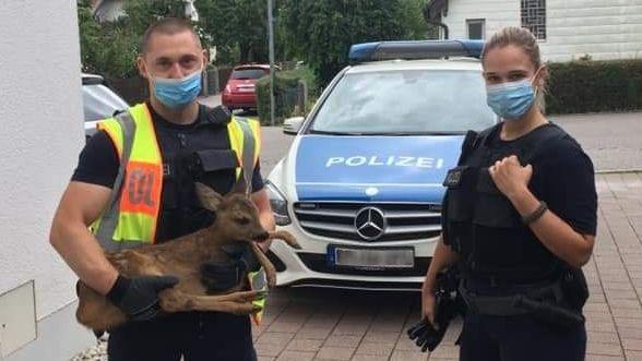 Herz für Tiere: Zwei Bundespolizisten und das verletzte Rehkitz