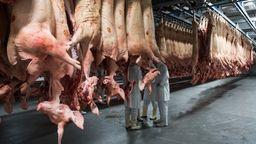 Schlachtung in in einem Kühlhaus des Fleischunternehmens Tönnies in Rheda-Wiedenbrück (Nordrhein-Westfalen).    Bild:picture-alliance/Bernd Thissen