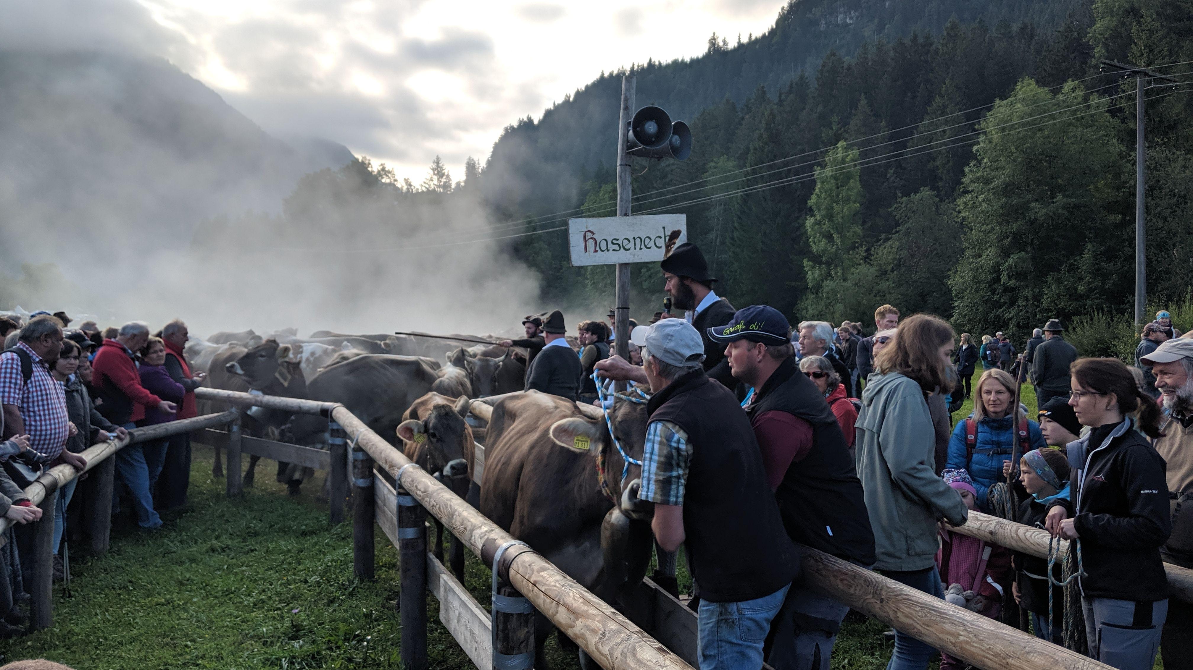 Viehscheid in Bad Hindelang, 11. September '19
