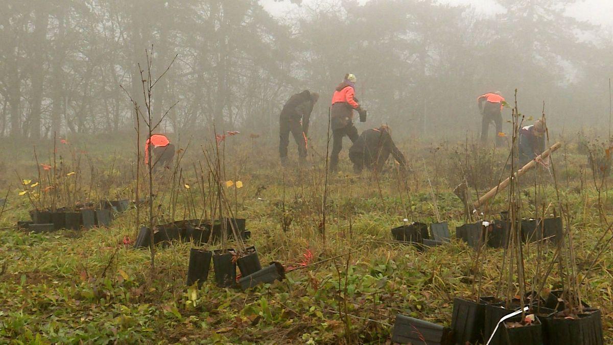 Aktivisten des Bergwaldprojekts pflanzen rund 1.000 Bäume im Würzburger Stadtwald.