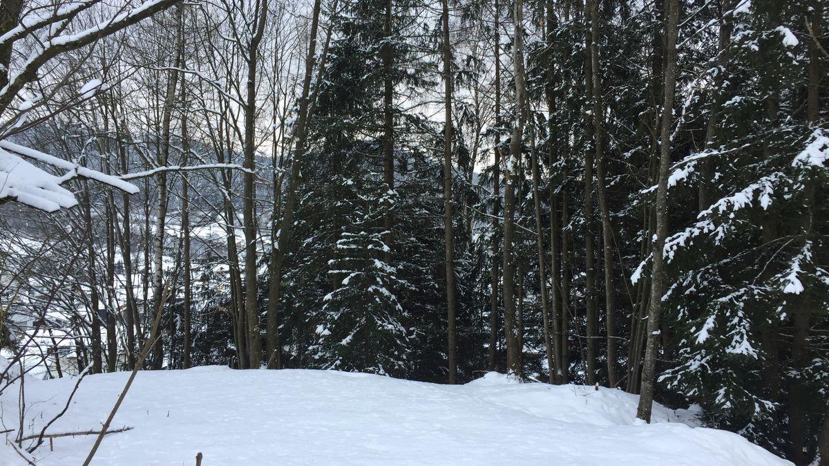 Schneebedeckte Landschaft im Bayerischen Wald (Symbolbild).