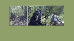 Menschenaffen | Bild:Max-Planck-Institut für evolutionäre Anthropologie / Montage: BR