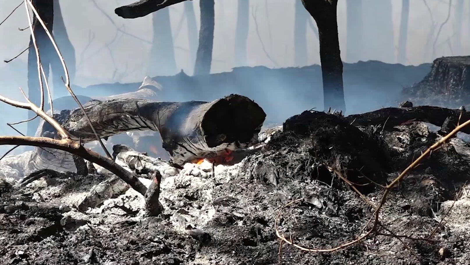 Waldstück bei Feucht brennt