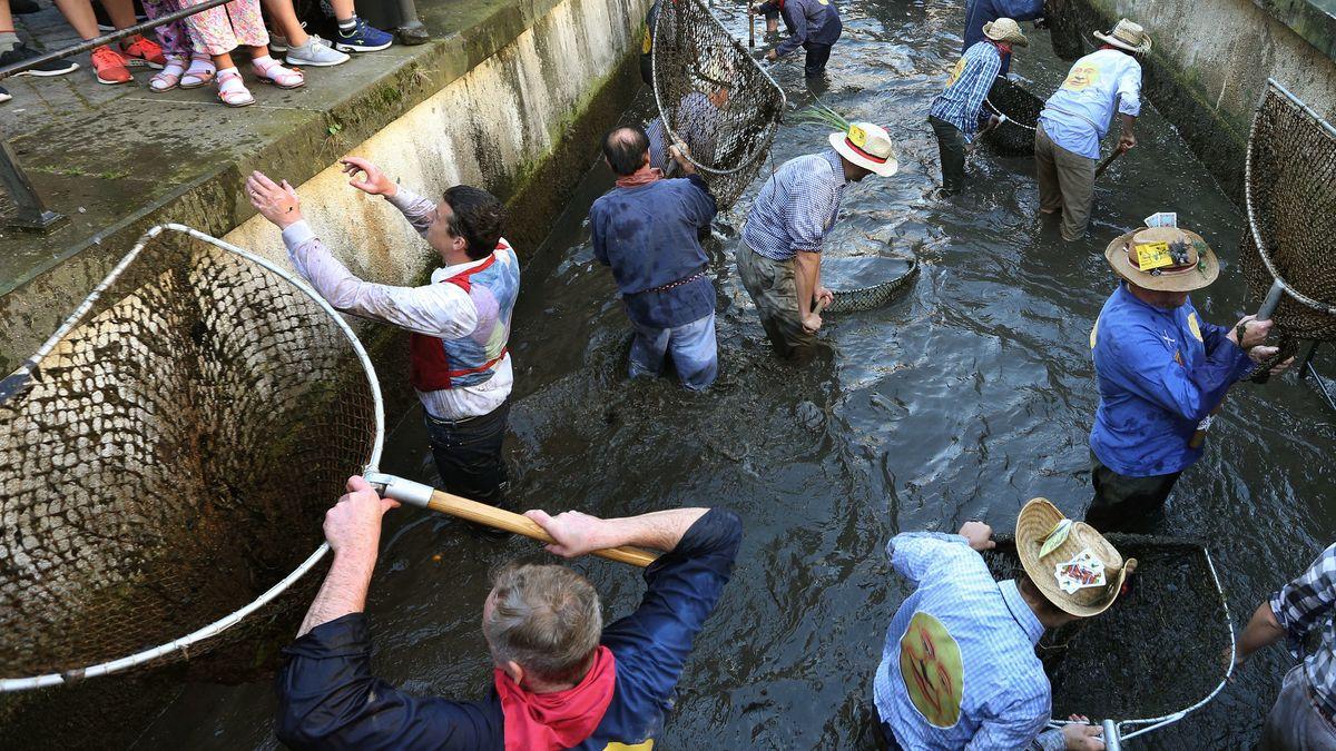 """Männer stehen am 20.07.2019 beim Ausfischen mit ihren Keschern, den sogenannten Bären, im Stadtbach. Wer beim Ausfischen des Baches die größte Forelle fängt, darf ein Jahr lang den Titel """"Fischerkönig"""" tragen."""