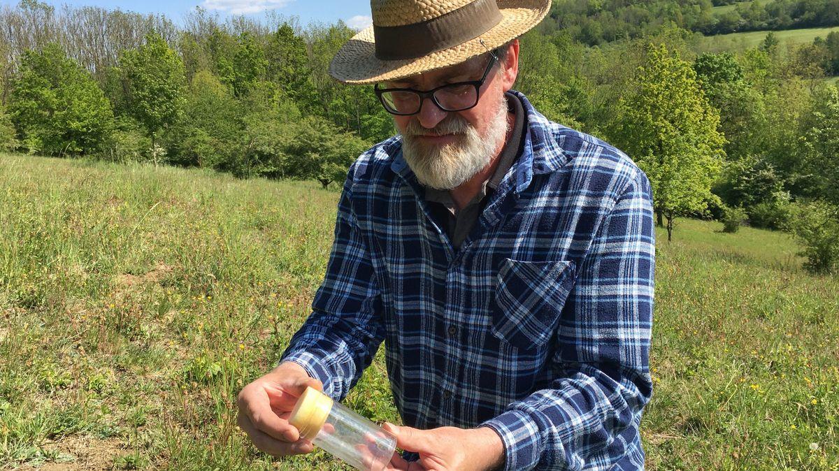 Insektenexperte Julian Bittermann begutachtet einen Schmetterling in einem durchsichtigen Gefäß.