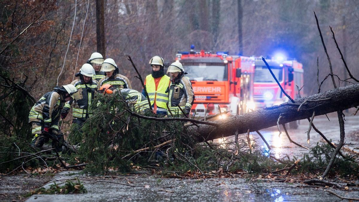 Feuerwehrleute begutachten einen auf eine Straße gestürzten Baum