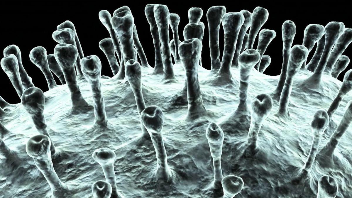 Elektronenmikroskop-Aufnahme des Corona-Virus