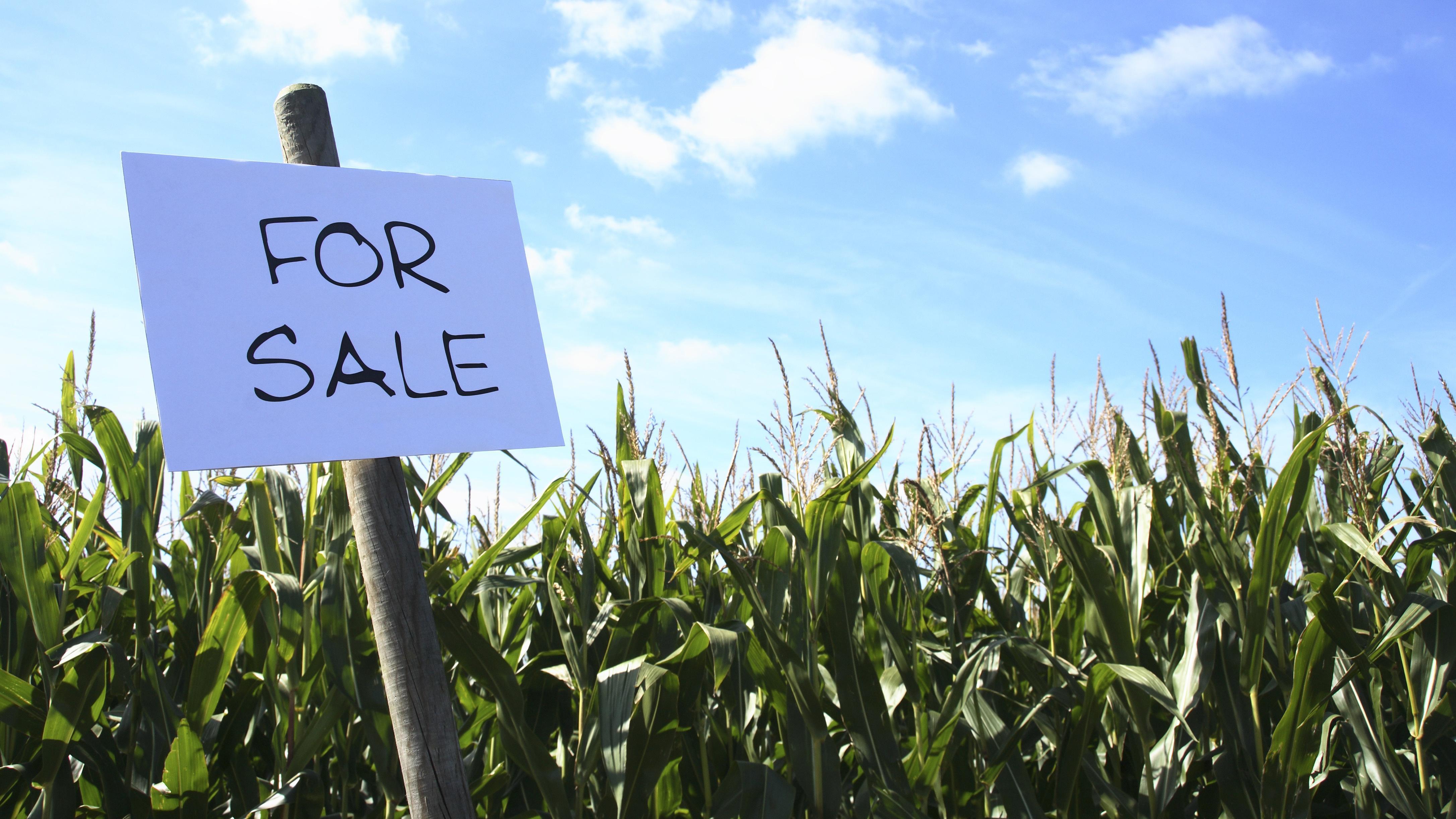"""Ein Maisfeld mit einem Schild """"For sale"""" davor."""