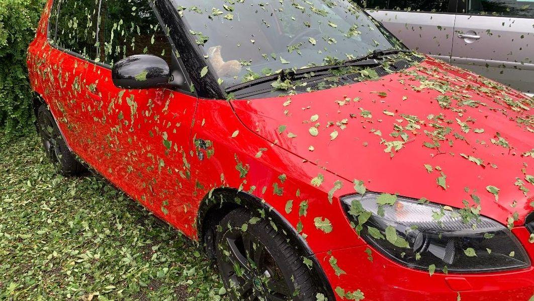 Bild von Auto und Blättern
