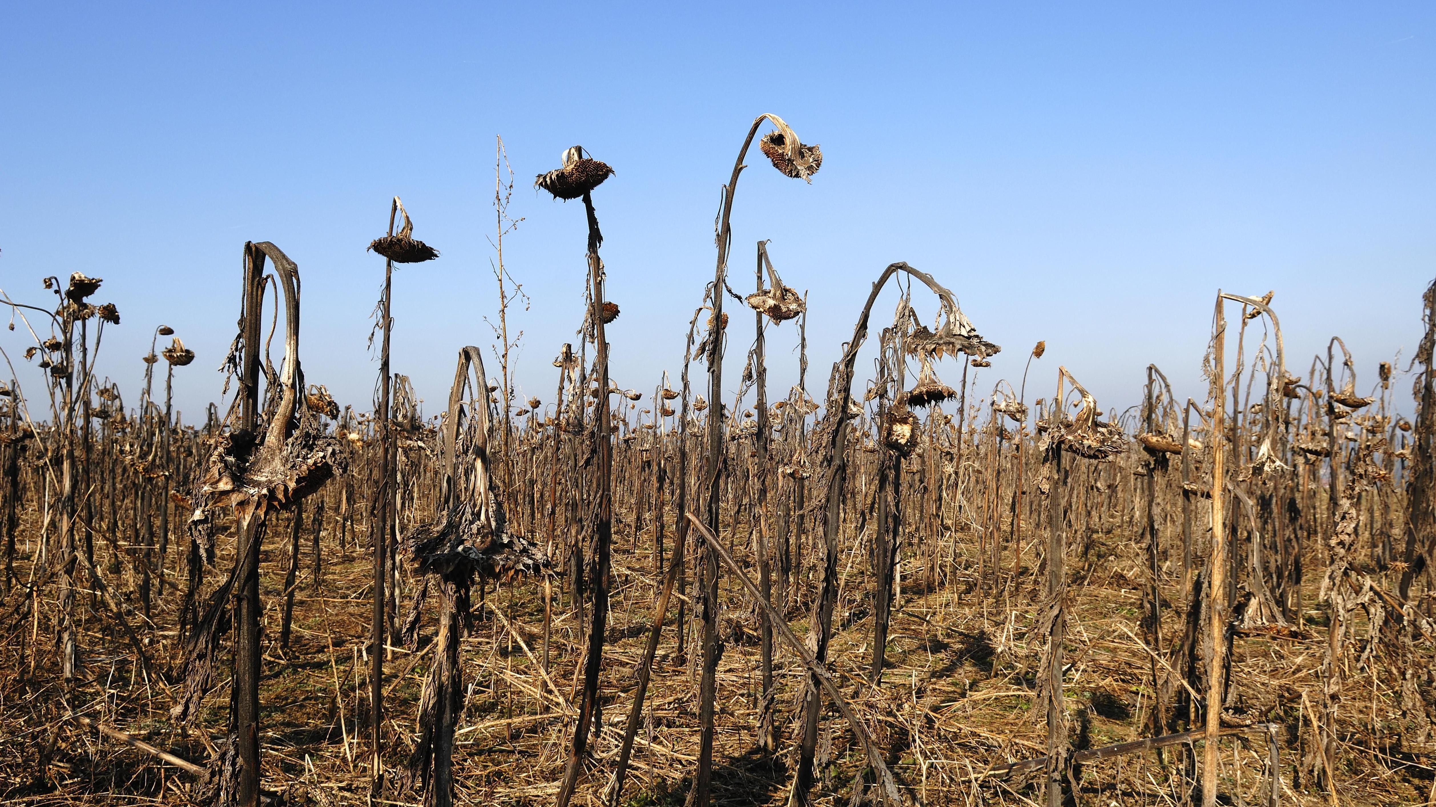 Dürremonitor: Anhaltende Trockenheit belastet Landwirte