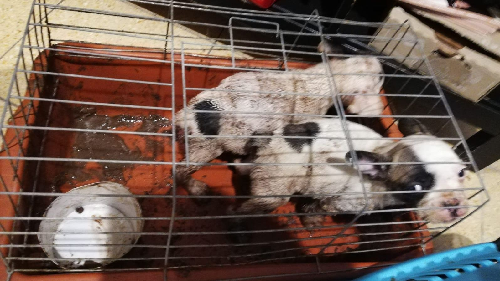Zwei Hundewelpen in einem verdreckten Transportkäfig.