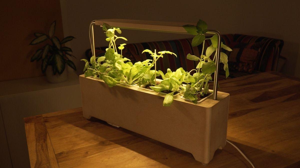 Neustart: Mit Urban Gardening zum Startup-Erfolg?