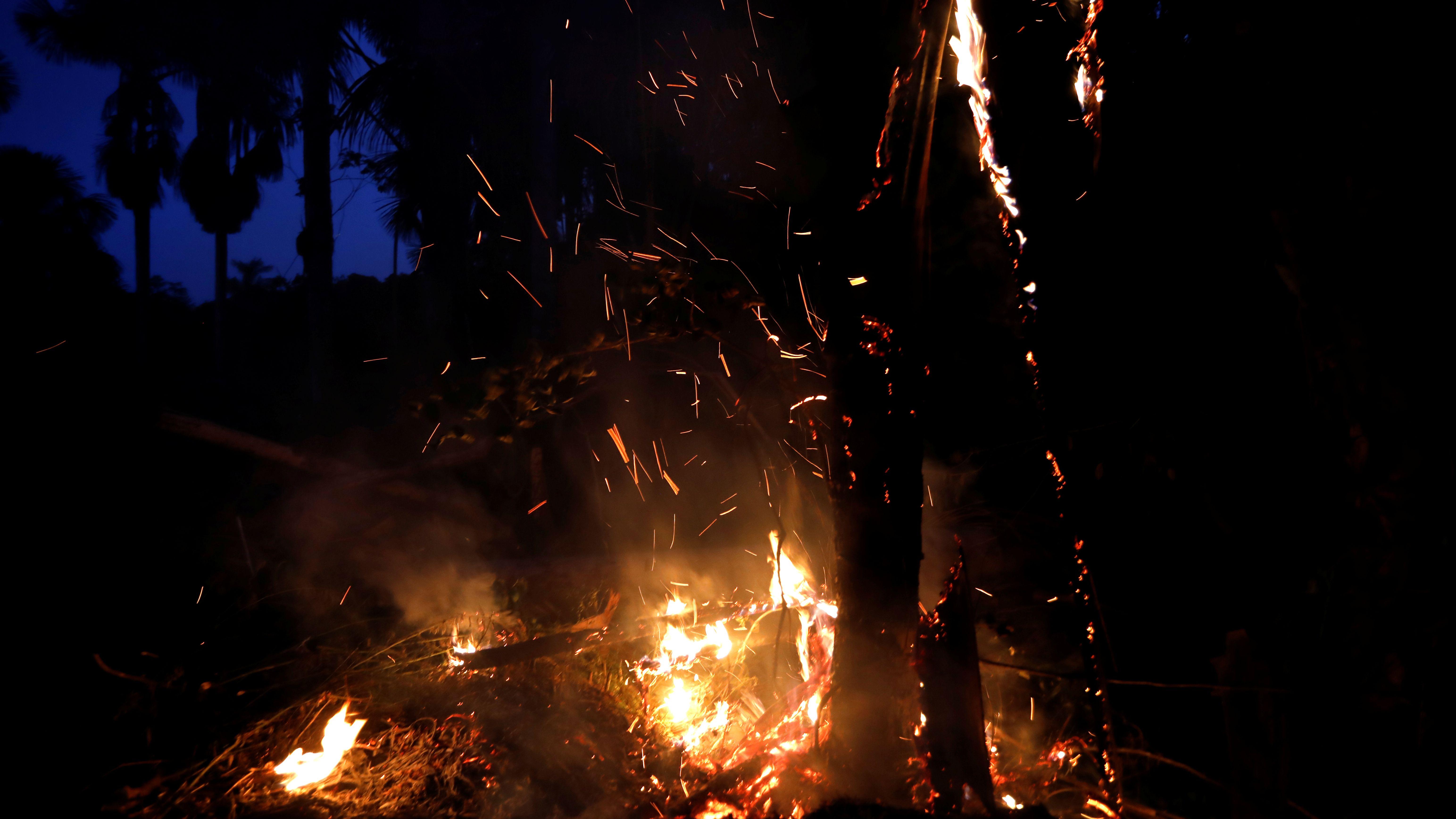 Brände im Regenwald Amazoniens