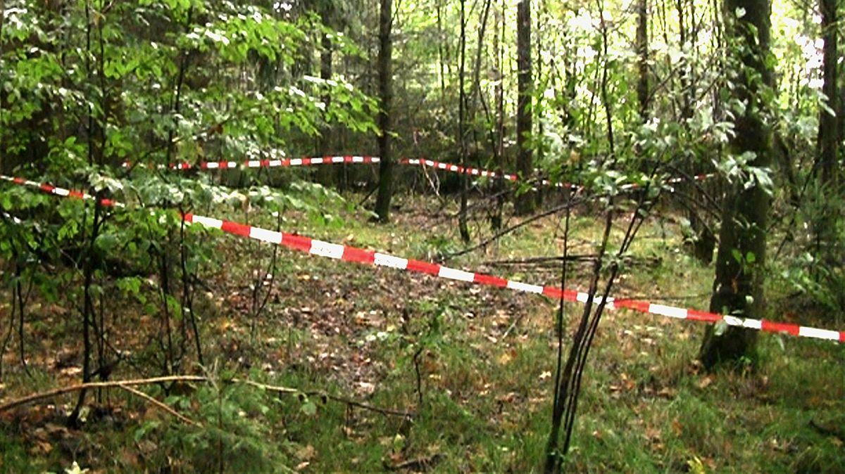 In diesem Waldstück bei Bernhardswald im Landkreis Regensburg wurden 2013 die sterblichen Überreste von Maria Baumer gefunden.