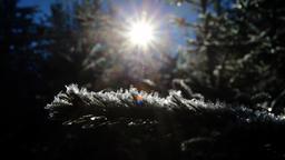 Mit Frost überzogene Nadelbäume  | Bild:dpa/pa/Karl-Josef Hildenbrand