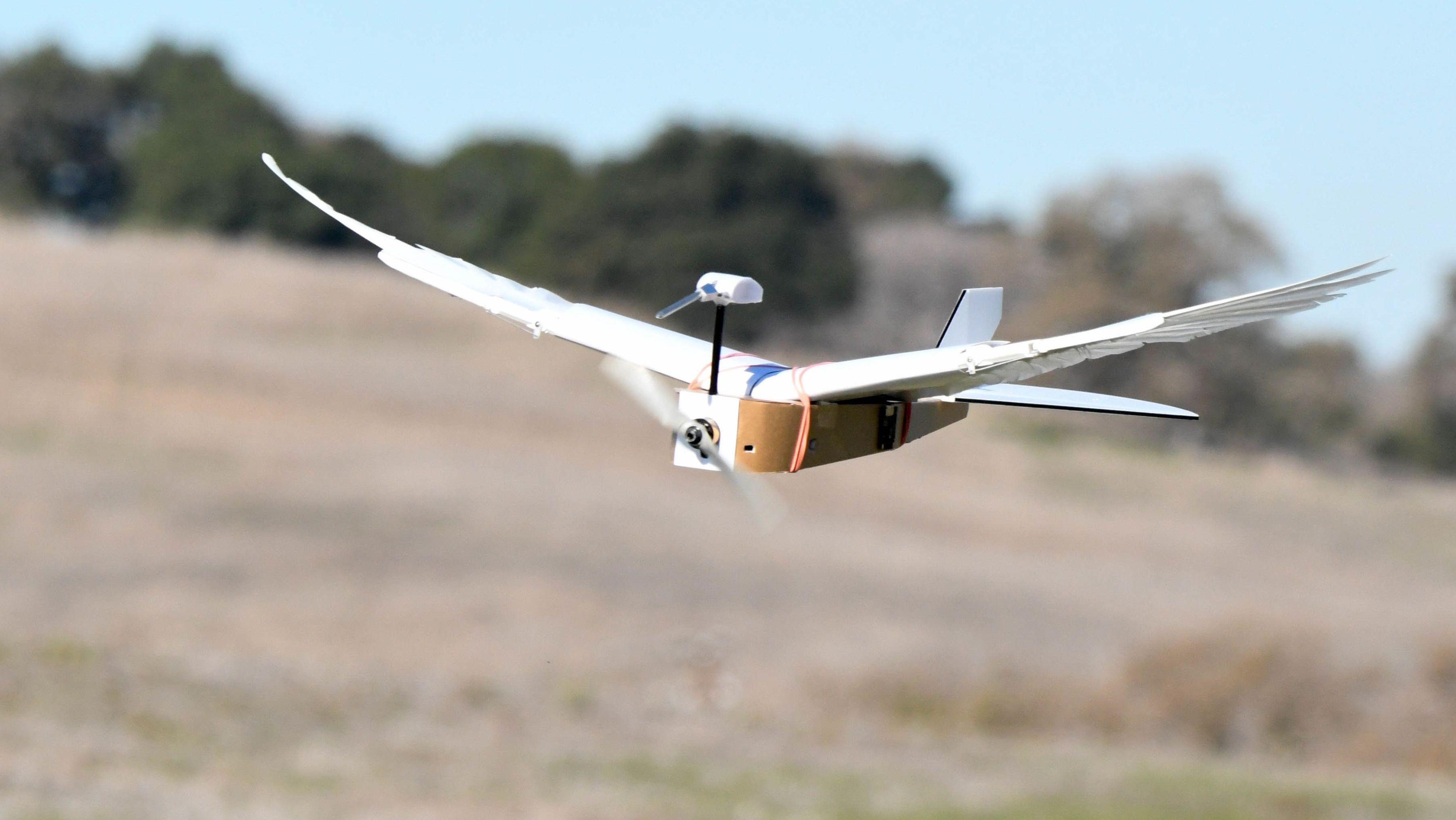 Der Flugroboter PigeonBot hat einen Rumpf aus Hartschaumbrettern mit Elektronik und an jeder Seite 20 echte Taubenfedern.