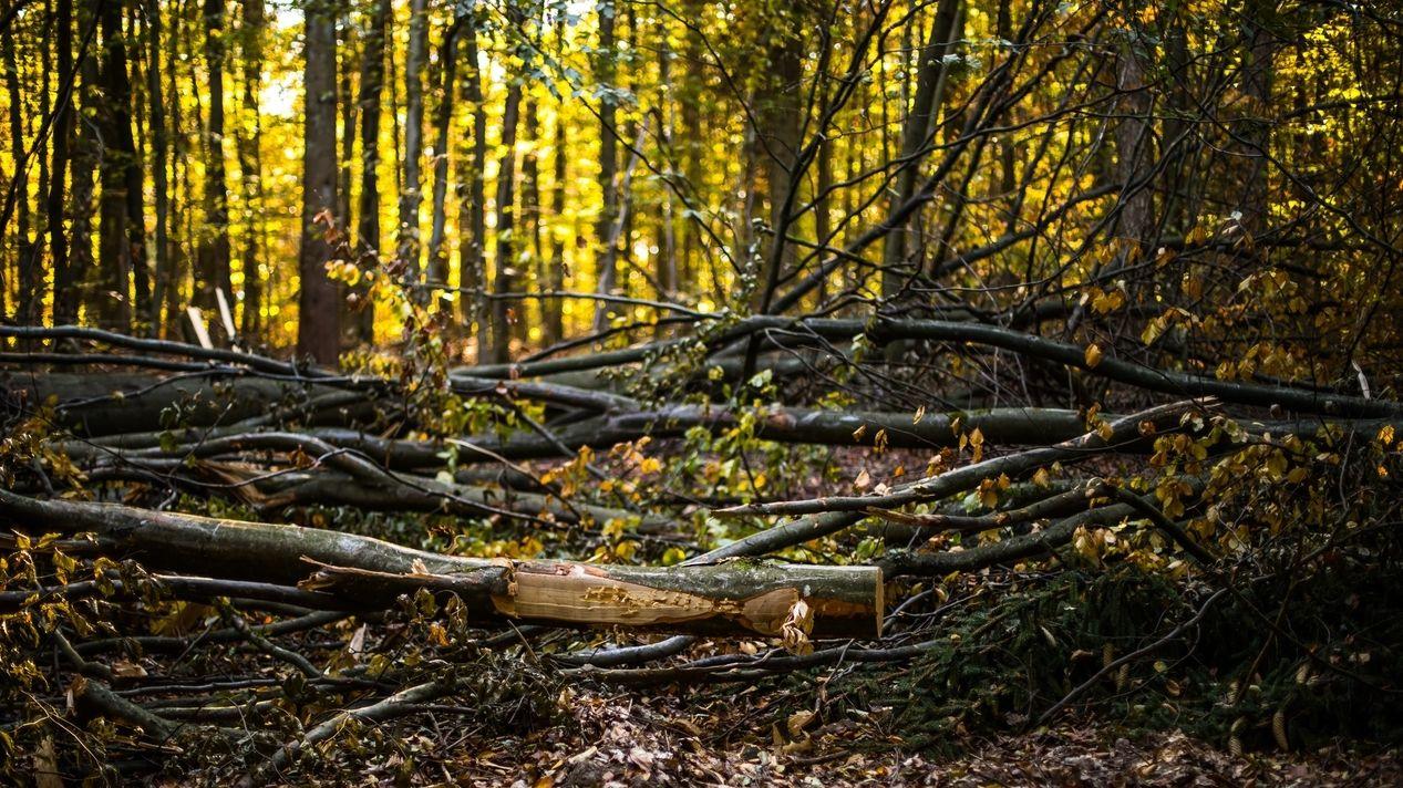 Herbstlandschaft am Baumwipfelpfad Steigerwald