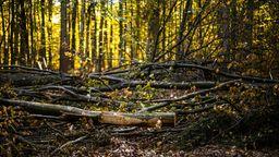 Herbstlandschaft am Baumwipfelpfad Steigerwald   Bild:BR/Markus Konvalin