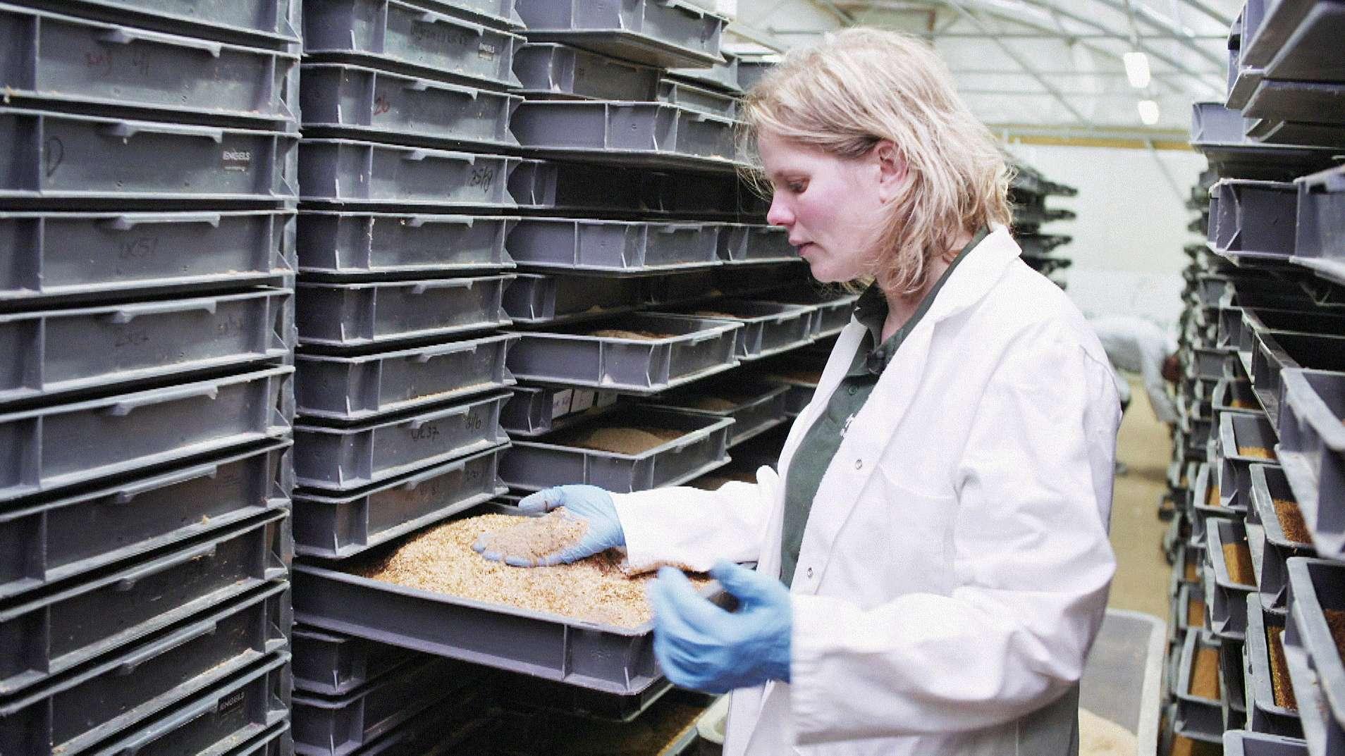 Insektenzuchtanlage in den Niederlanden