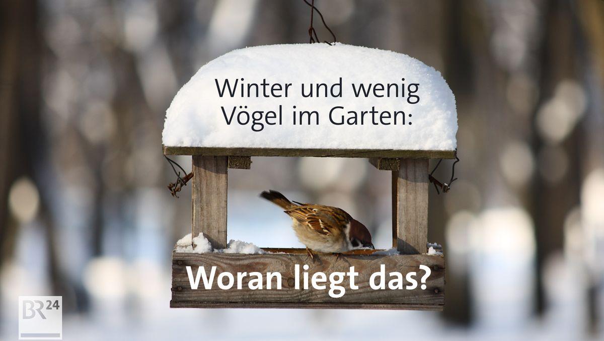 Warum sind so wenig Wintervögel im Garten?