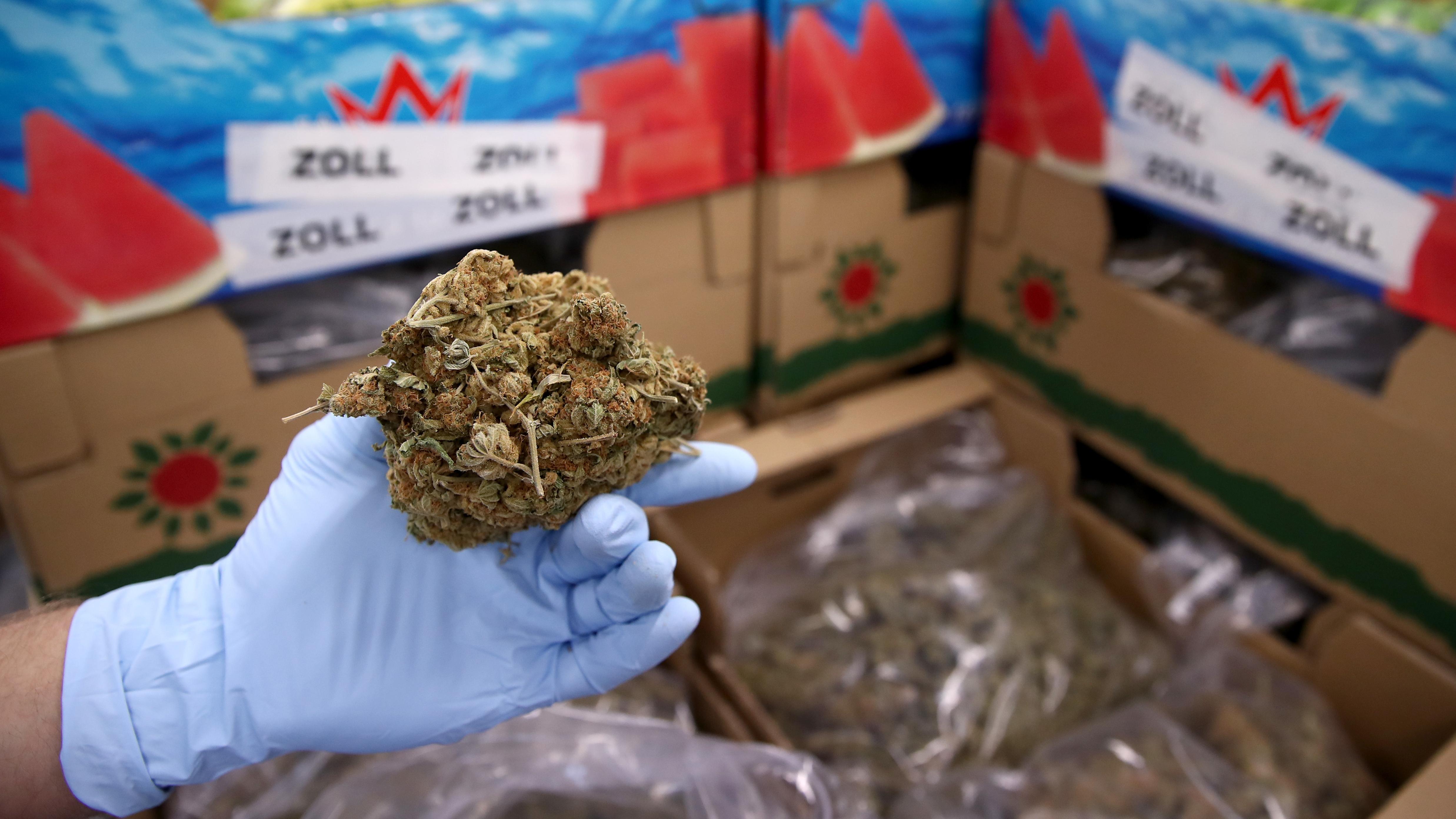 Ein Mitarbeiter des Zolls hält Marihuana in der Hand
