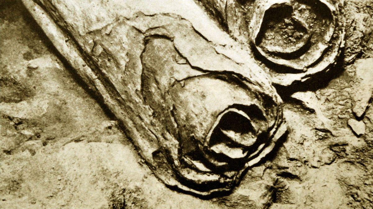 Die Qumran-Rollen wurden zwischen 1947 und 1956 in elf Felshöhlen am Toten Meer gefunden. Forscher kommen ihrem Rätsel mit DNA-Analysen näher.