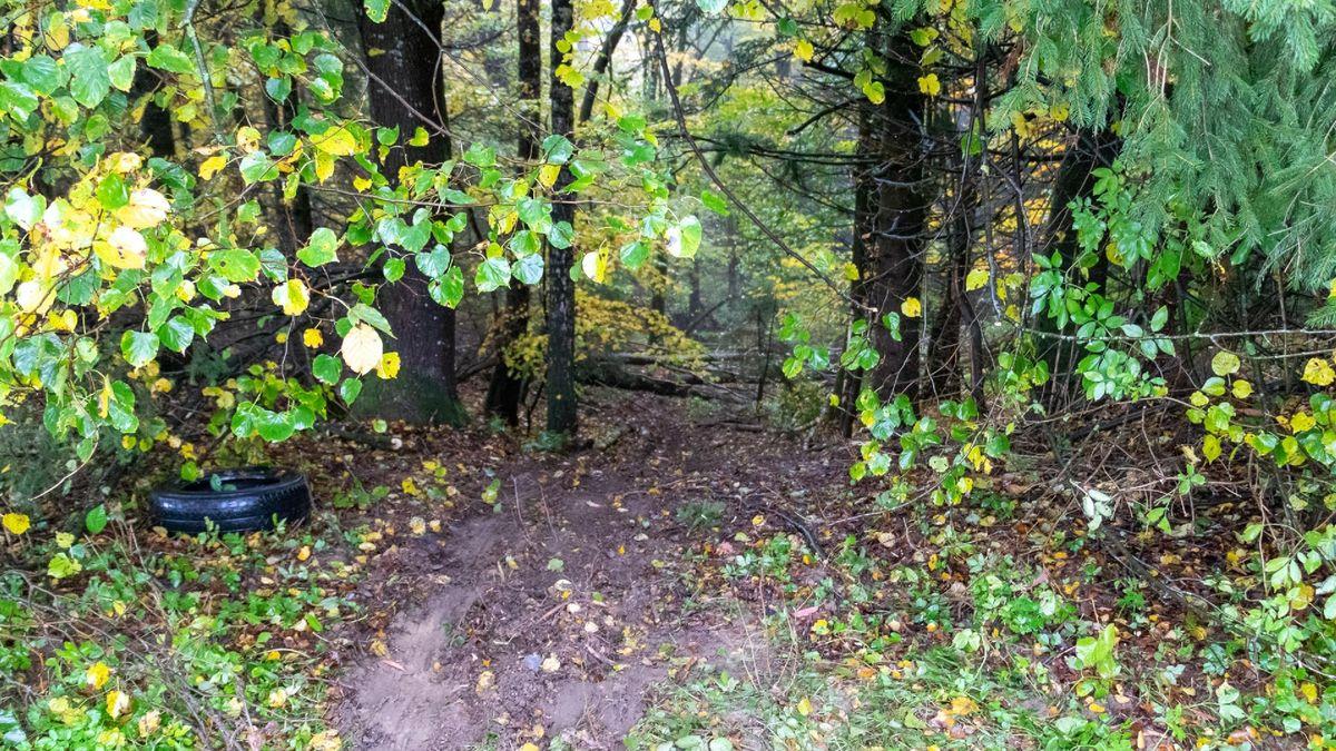 Die Stelle, an der das Auto in das Waldstück gefahren ist