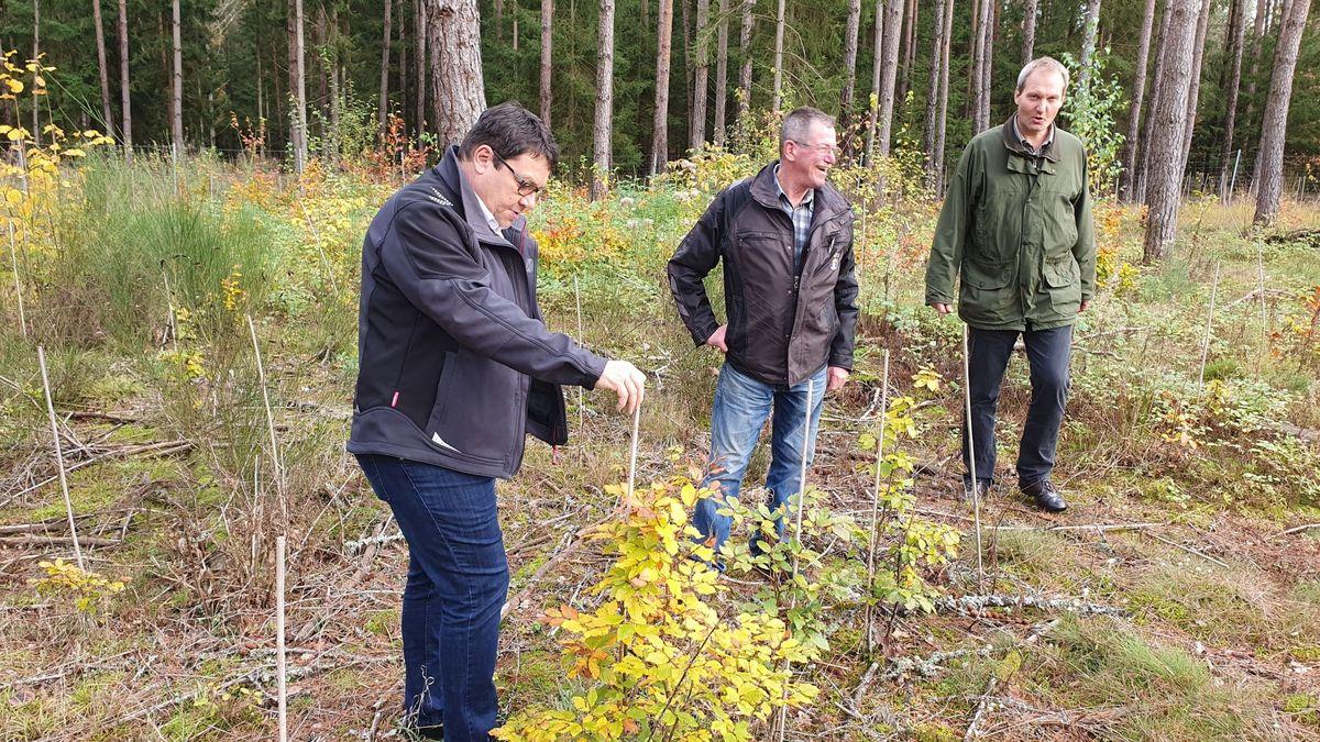 Die Gemeinde Wackersdorf hat binnen zwei Jahren knapp 10.000 Bäume nahe der Industriestraße und am Edelmannsee gepflanzt.