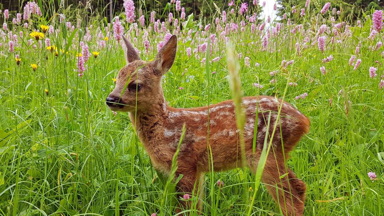 """Der Dokumentarfilm """"Die Wiese"""" setzt sich für Artenvielfalt ein"""