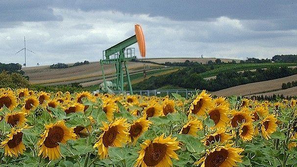 Erdöl-Bohrturm in Sonnenblumen-Ackerland-Idylle - in Ampfing könnten bald wieder Bohrtürme stehen