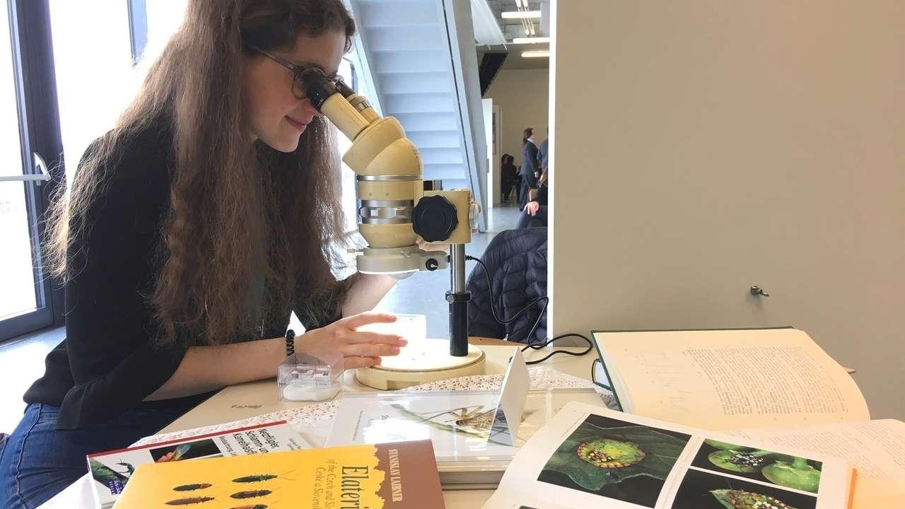 Anna Klemmer aus Cham: Sie hat das Insektenvorkommen an Biotopgrenzen, also dem Übergangsbereich zwischen Wald und Wiese erforscht.