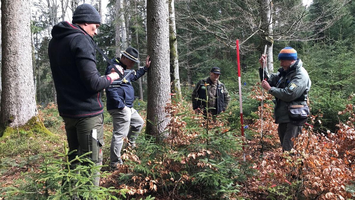 Wie stark schädigt Verbiss die Bäume - Inventur im Wald