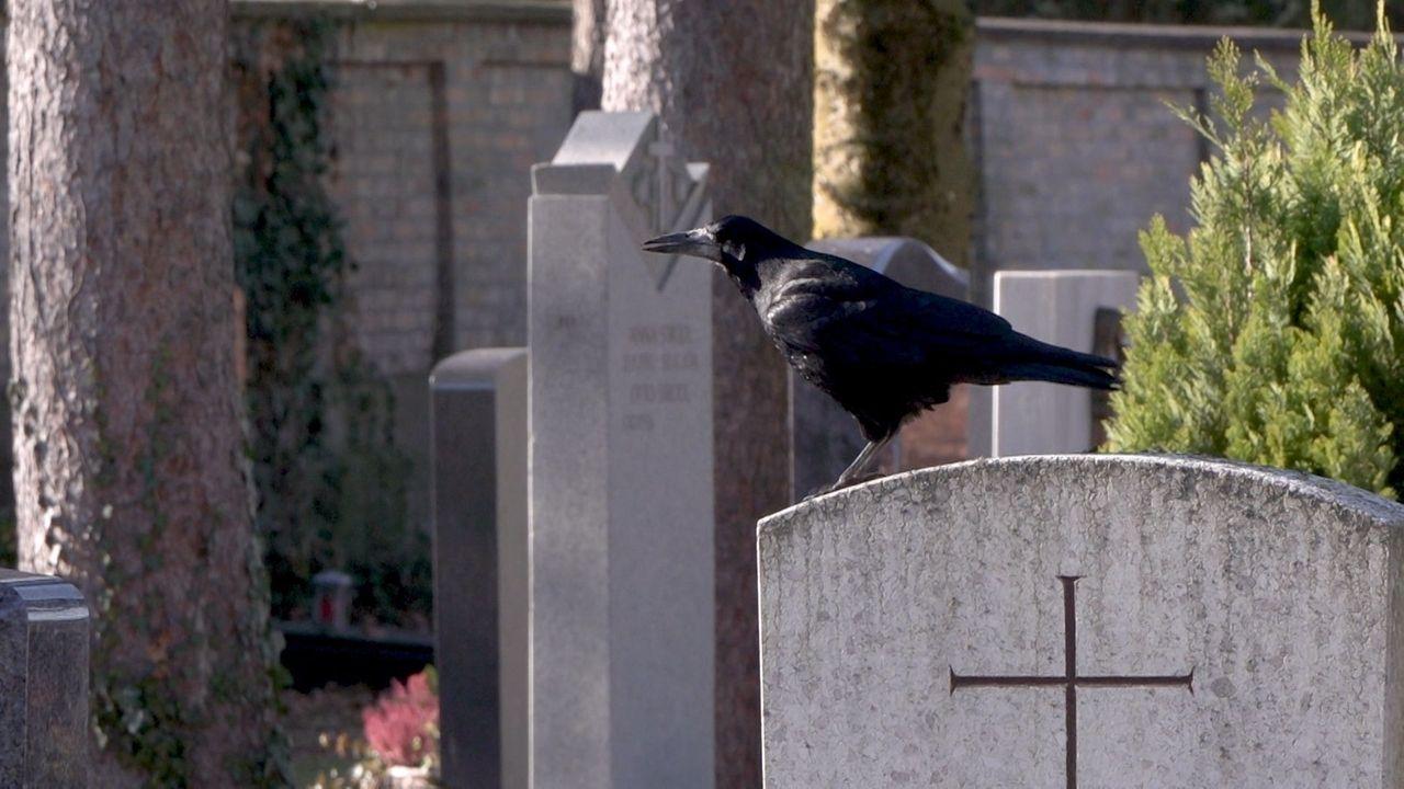 Krähe sitzt auf einem Grabstein