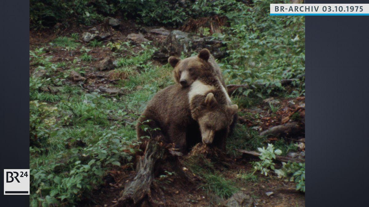 Zwei kleine Bären im Spiel
