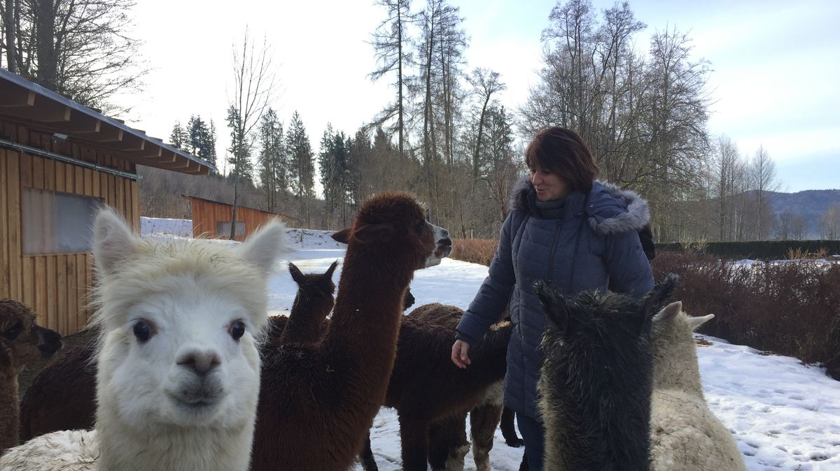 Elke Haase-Sporrer mit ihren Alpakas in Oberfrauenau