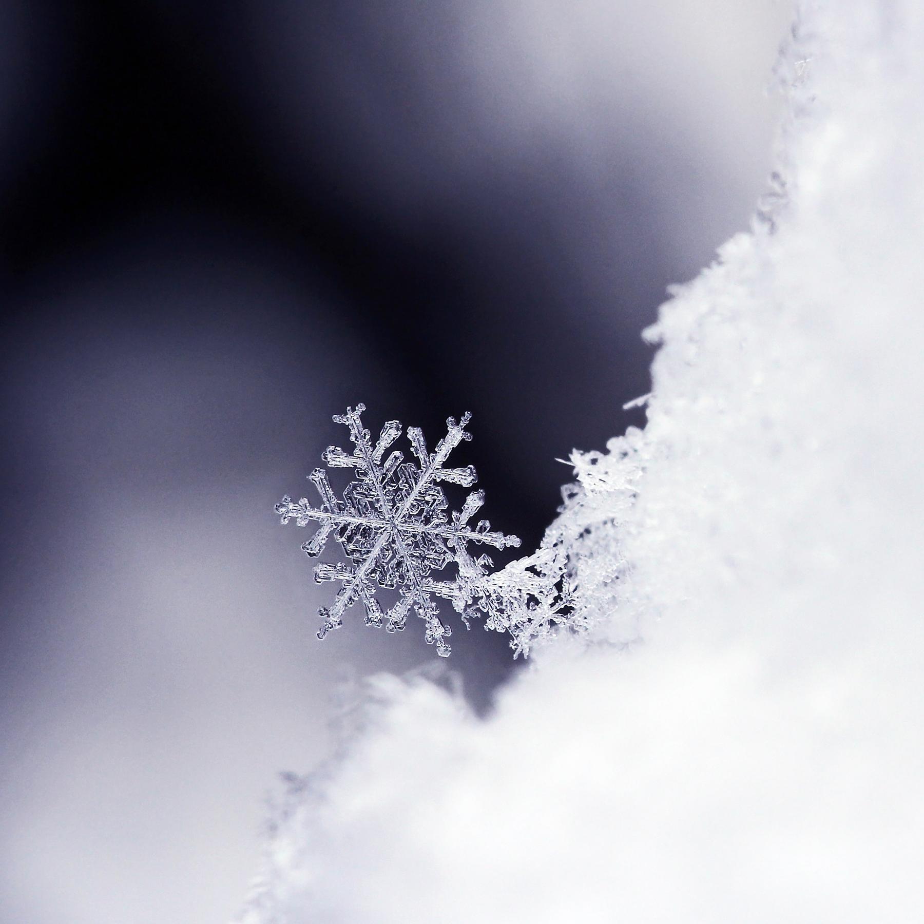 Schnee - Faszinierende Flocken und ihre Geheimnisse