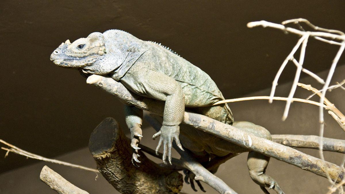 In der Reptilienauffangstation in München kommen Reptilien aller Art unter (Symbolbild).
