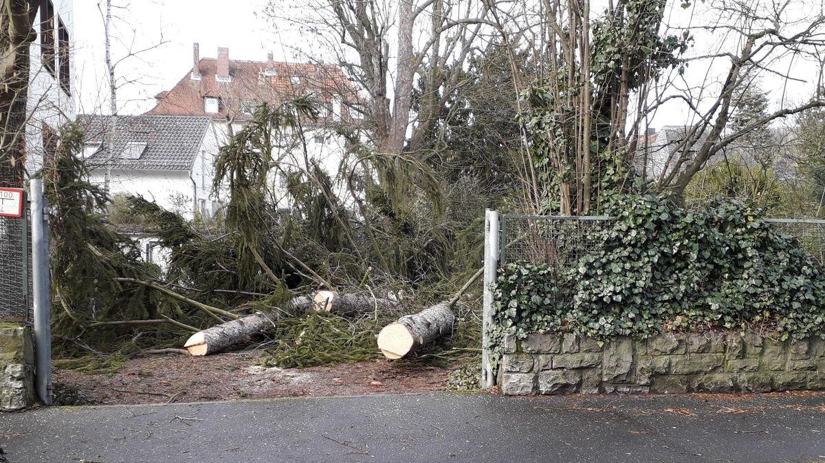 Kaputte Bäume in einem Garten
