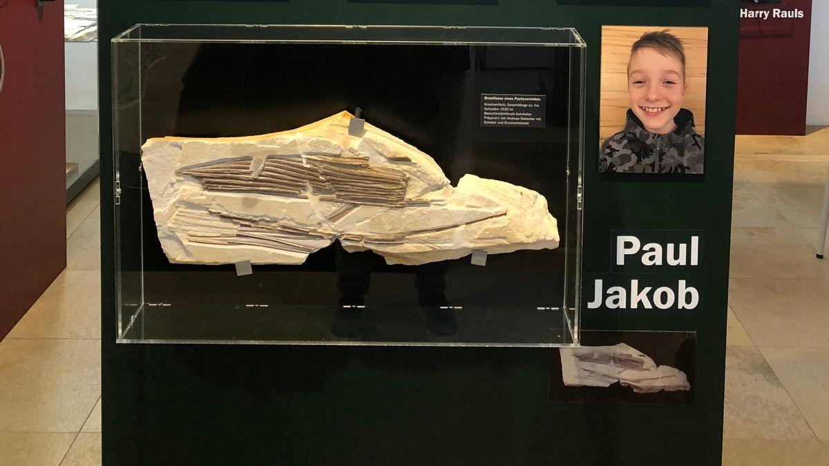 Die Flosse eines Riesenfisches im Jura-Museum in Eichstätt