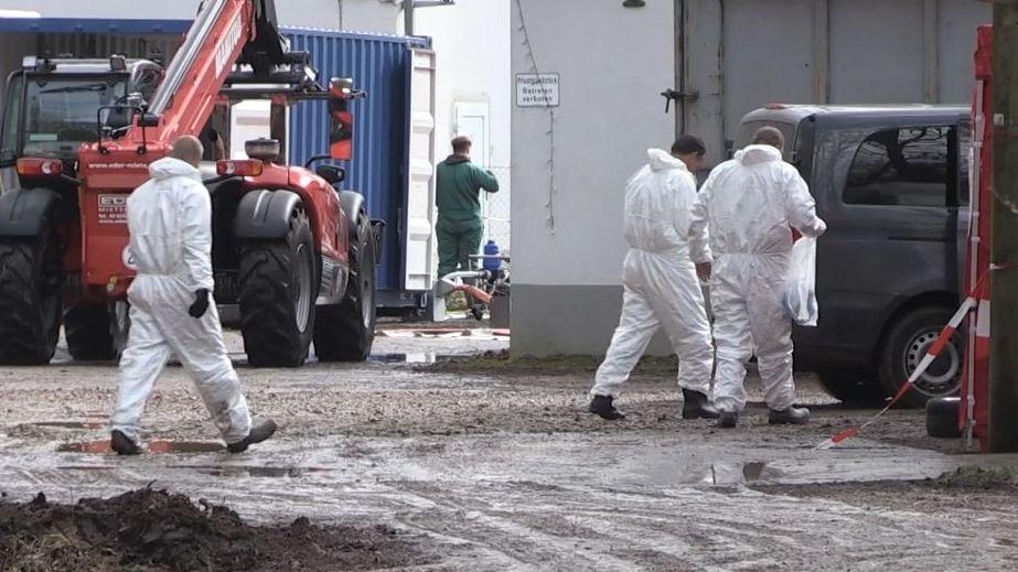 Über 50.000 Tiere mussten in einem Geflügelbetrieb wegen der Vogelgrippe getötet werden.
