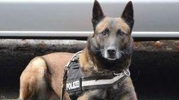 Hat eine ganz feine Nase: Diensthund der unterfränkischen Polizei  | Bild:Polizei Unterfranken