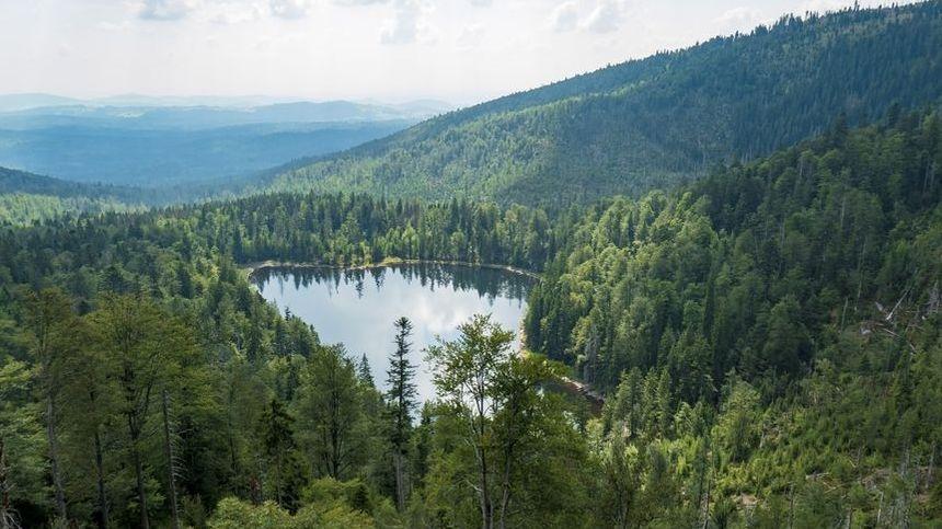 Der Bayerischer Wald ist als Nationalpark vor Rodungen geschützt.
