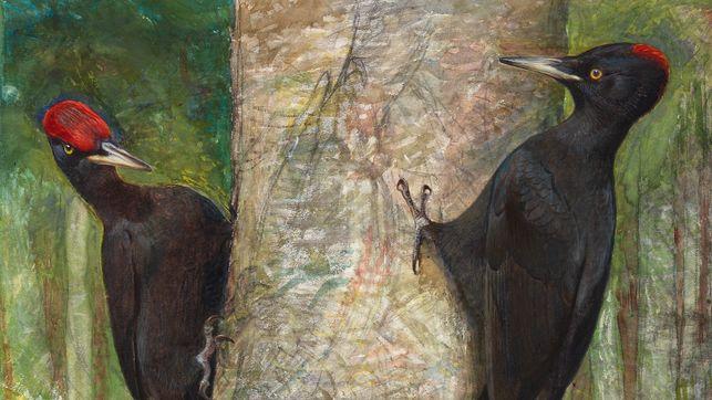 2 schwarze Vögel mit roten Hauben klammern sich an einen Baum