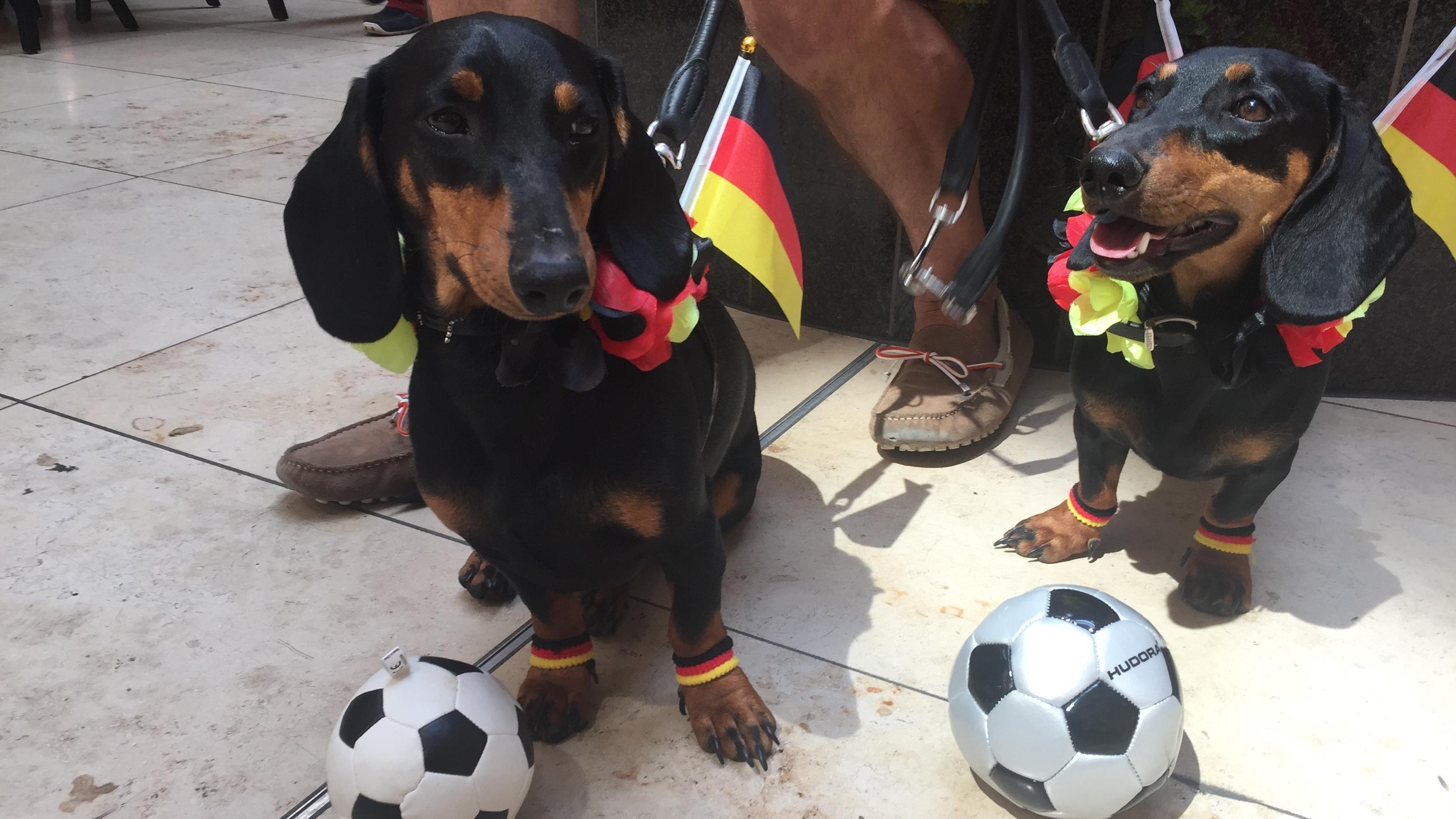 Seppi und Moni sind die Hausdackel in Deutschlands erstem Dackelmuseum. Während der Fußball-Weltmeisterschaft müssen sie als WM-Orakel ran.