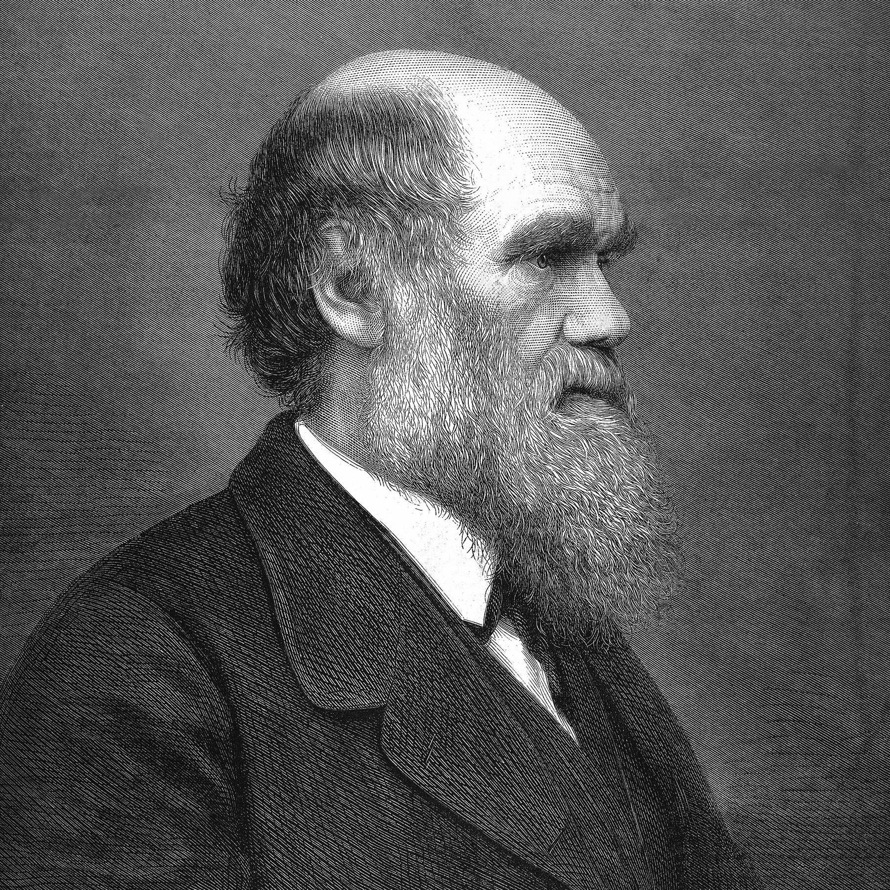 Was bleibt von Darwin - Forschung zur Evolution heute