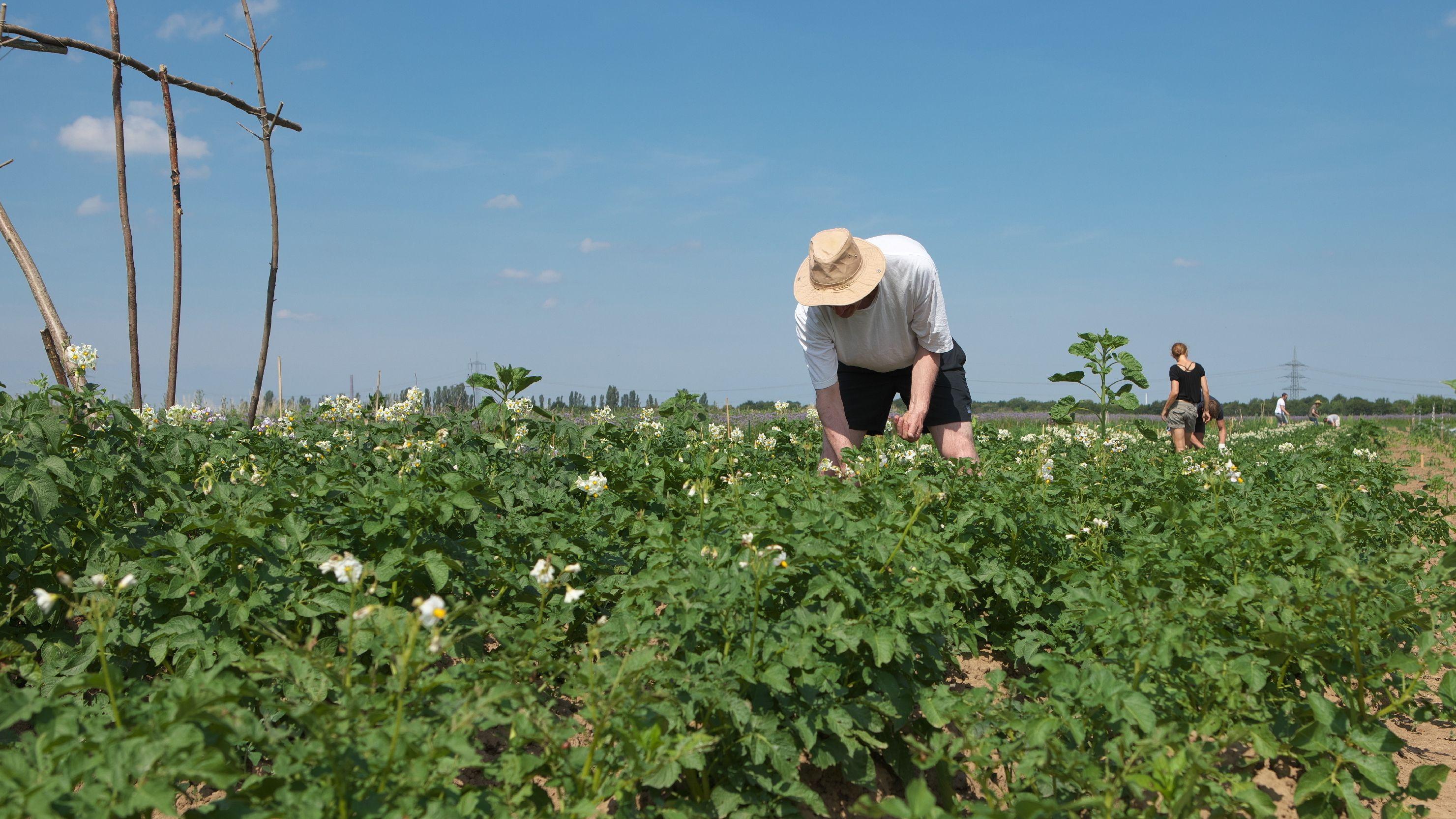 Ein Ökolandwirt in Troisdorf bei der Arbeit